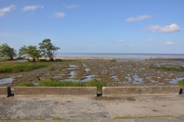 Los tubos geotextiles ayudan a la regeneración natural de los manglares. El tubo biodegradable lleno de arena y agua se utiliza para formar una barrera, y luego se planta hierba spartina en la zona.