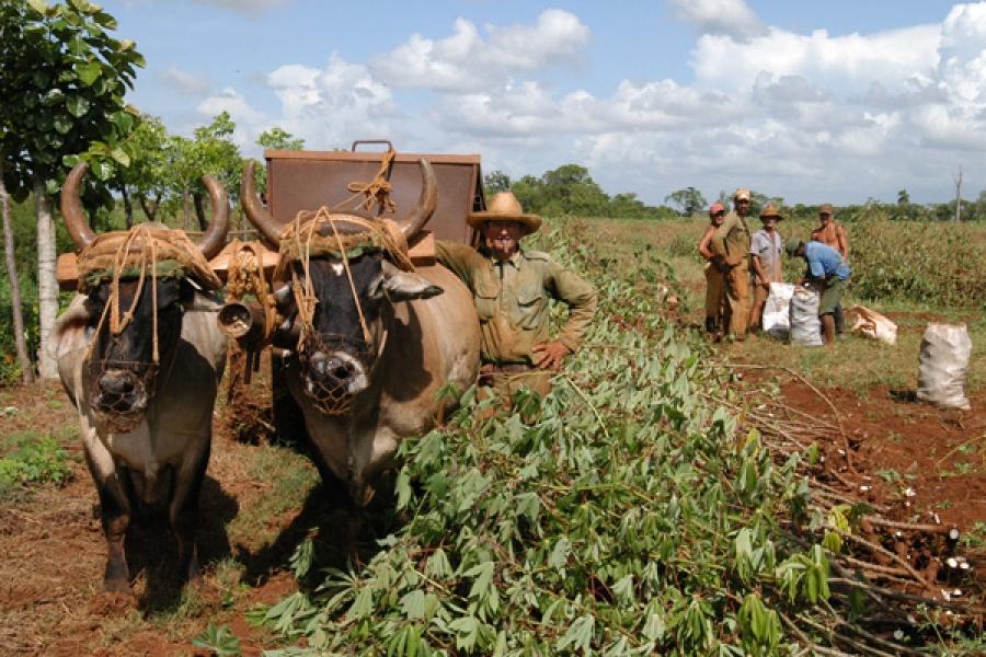 Las cooperativas han sido menos exitosas que los campesinos individuales que contratan fuerza de trabajo debido a la falta de autonomía en su gestión.