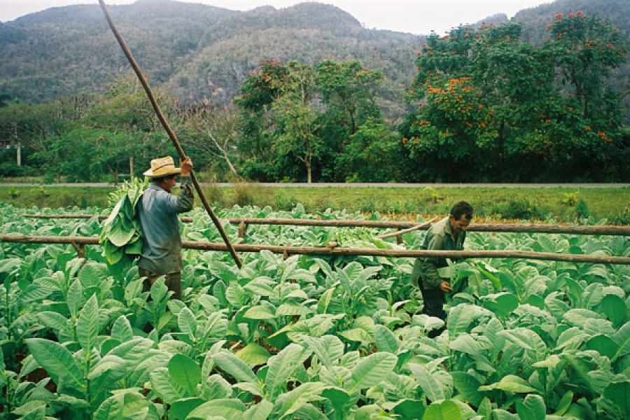 El sector cooperativo agrícola era el único con acceso a préstamos hasta la aplicación de la actual política crediticia.
