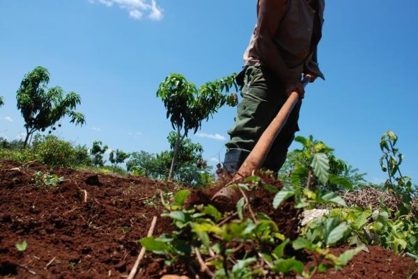 Elevar la producción de alimentos es una de las metas de la reforma impulsada por el gobierno de Raúl Castro.