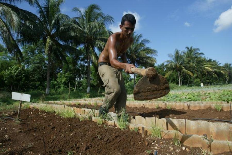 La agricultura demanda mucha fuerza de trabajo, pero es poco atractiva para los jóvenes.