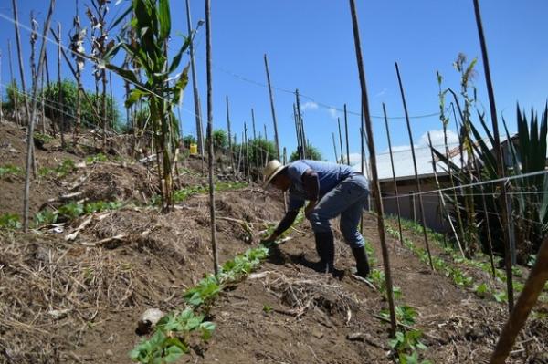 José Alberto Chacón quita malezas en el terreno donde cultiva frijol, en su pequeña finca de Pacayas, en las laderas del volcán Irazú, en Costa Rica. El cultivo en terrazas le permite controlar las corrientes de agua que erosionarían el suelo.