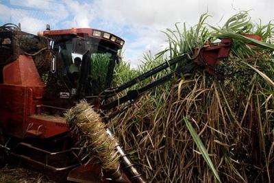 La mecanización es uno de los factores del sector azucarero que requieren modernización.