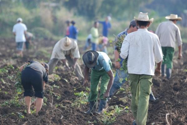 Cuba recibió reconocimiento de la FAO por erradicar el hambre