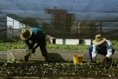 La agricultura familiar provee el 70 % de la producción mundial de alimentos.