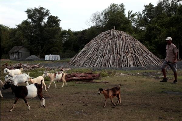Los hornos de tierra son el método más usado para hacer carbón vegetal en Cuba, como el elaborado en la Ciénaga de Zapata, en las cercanías de la oriental localidad de Playa Girón.