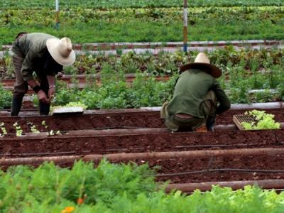 Agricultura próspera es posible en Cuba