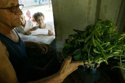 El acceso a vegetales frescos resulta difícil para la familia cubana.