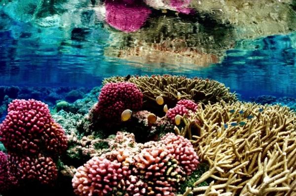 Tomar medidas contra la sobrepesca y la excesiva contaminación costera puede ayudar a los arrecifes a recuperarse.