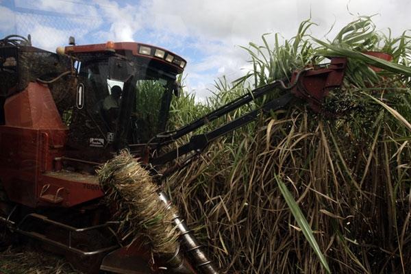 Cuba atesora más de cuatro siglos de experiencia en la producción azucarera.