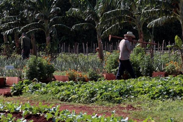 Hola Caribe: Cambio climático y agricultura