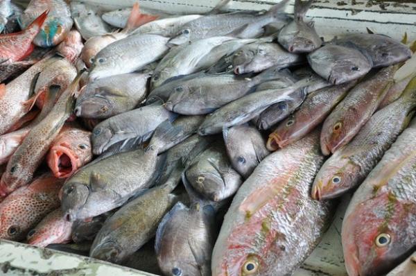 La pesca es una importante fuente de ingresos en los países que integran la Comunidad del Caribe.