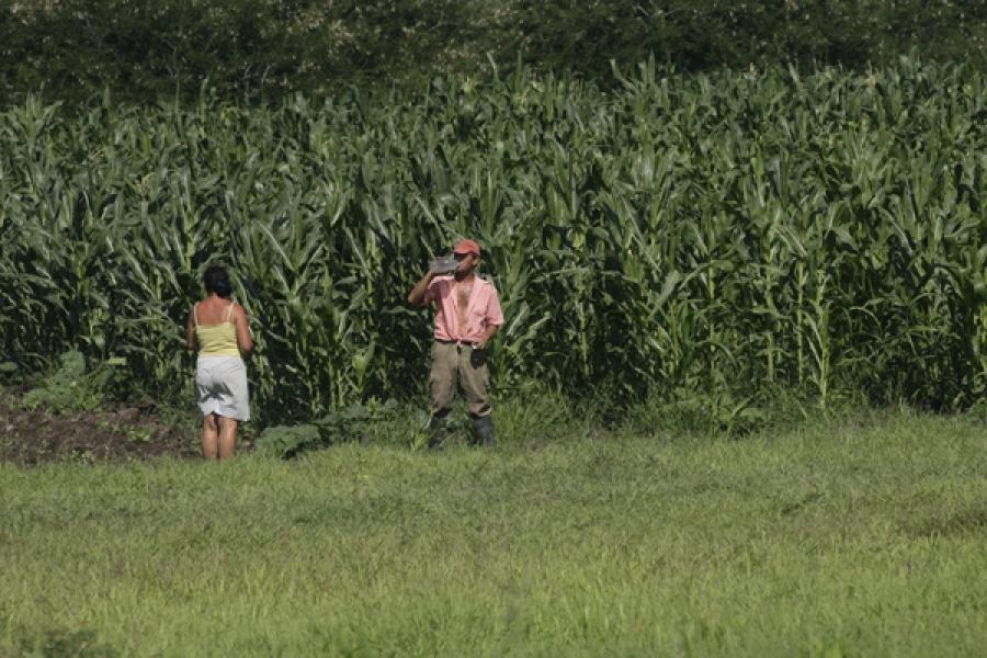 Producir granos como maíz, soya o girasol en periodos con menos incidencia de lluvias podría contribuir a disminuir el impacto de la sequía en el sector agrícola.