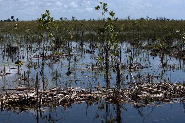 El estudio del clima en el mayor humedal del Caribe evidencia la disminución progresiva de las precipitaciones con respecto a etapas anteriores.