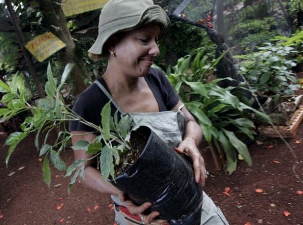Una trabajadora de la Cooperativa Vivero Alamar, traslada posturas de plantas ornamentales en un suburbio de La Habana. El acceso al empleo es un problema para las mujeres rurales cubanas.
