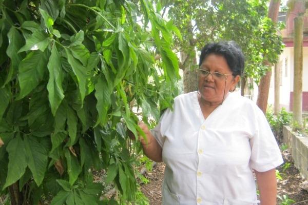 Oviedo indicó que se requiere un registro sistemático del impacto del cambio climático en las invasiones de plantas en Cuba.